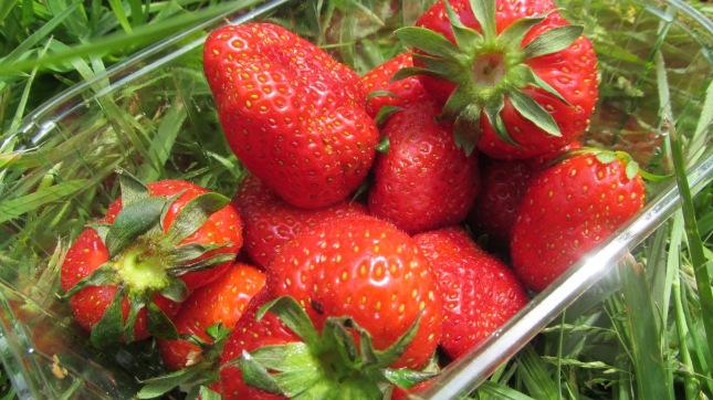 fraises comme vous l'avez deviné