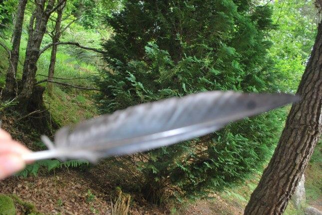 ma plume du jour (la photo n'est pas top )