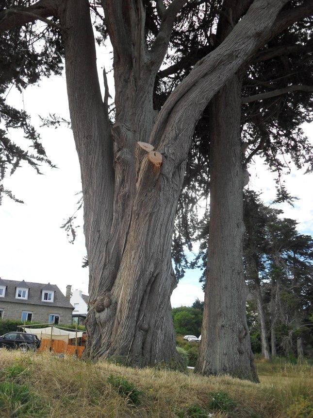 bel arbre avec ce tronc