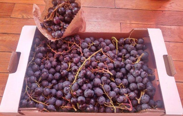 8b550f3f7a63 En route pour une monodiète de raisin.